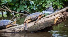 Destination Tortuguero Costa Rica