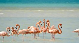 Destination Isla Holbox Mexico