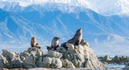 Reiseziel Kaikoura Neuseeland