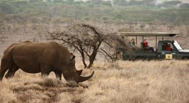 Empfohlene Individualreise, Rundreise: Hoch über Kenia