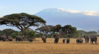 Empfohlene Individualreise, Rundreise: Tansania – die Klassiker im Norden