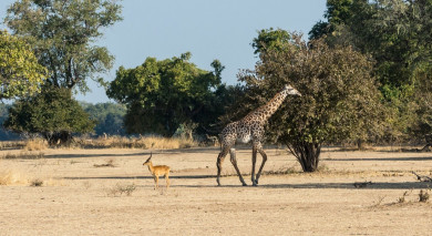 Example private tour: Zambia: Victoria Falls and Safari Highlights