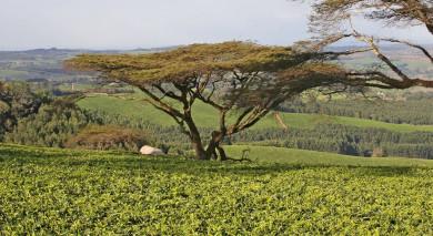 Empfohlene Individualreise, Rundreise: Höhepunkte von Malawi