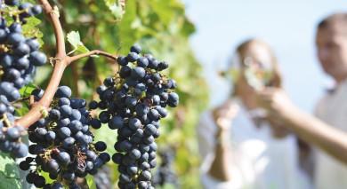 Empfohlene Individualreise, Rundreise: Chile – Seenregion und Weinland