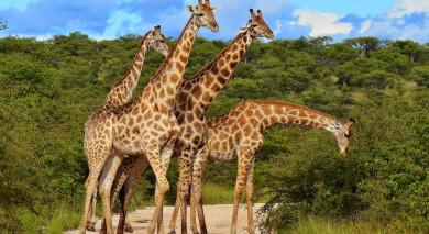 Empfohlene Individualreise, Rundreise: Kenia & Tansania Safarireise: Ungezähmte Wildnis