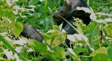 Empfohlene Individualreise, Rundreise: Tansania und Ruanda: Gorilla-Trekking, Safari und Viktoriasee