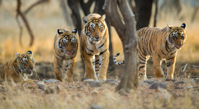 Example private tour: India's Golden Triangle and Tigers