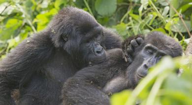 Example private tour: Grand Tour of Uganda