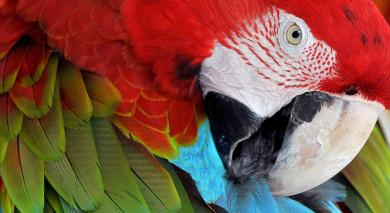 Empfohlene Individualreise, Rundreise: Exotische Vögel & Bezaubernde Landschaften – Vogelbeobachtung in Guatemala