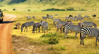 Empfohlene Individualreise, Rundreise: Tansania & Mauritius: Safaris und Strand