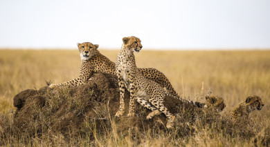 Example private tour: Serengeti Safari and Mauritius Beach Getaway