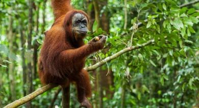 Empfohlene Individualreise, Rundreise: Die Klassiker auf Sumatra und Java