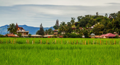 Example private tour: Best of Sulawesi and Sumatra