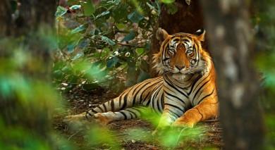 Empfohlene Individualreise, Rundreise: Bengalische Tiger und der Taj Mahal