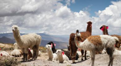 Empfohlene Individualreise, Rundreise: Peru: Geheimnisvoller Norden