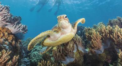 Empfohlene Individualreise, Rundreise: Nordaustralien: Naturwunder, Nationalparks & Great Barrier Reef