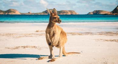 Empfohlene Individualreise, Rundreise: Australien Roadtrip – Tasmaniens Naturwunder