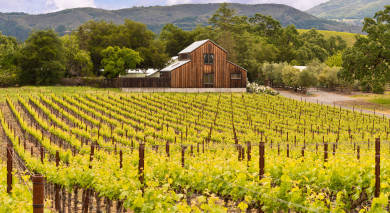 Example private tour: Road Trip: Northern California's Landscapes and Wine