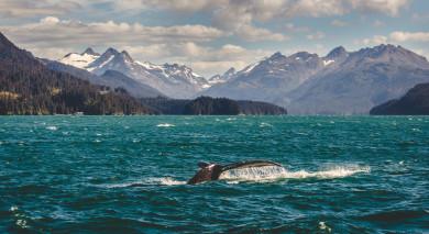 Empfohlene Individualreise, Rundreise: Alaska Roadtrip – Legendäre Landschaften & Denali Nationalpark
