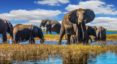 Empfohlene Individualreise, Rundreise: Victoriafälle, Safaris in Botswana & Strände auf Mauritius