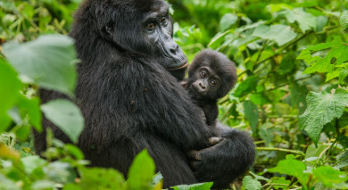 Example private tour: Highlights of Africa: Gorillas, Migration and Victoria Falls