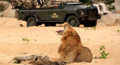 Example private tour: Simply South Africa: Safari and Wine