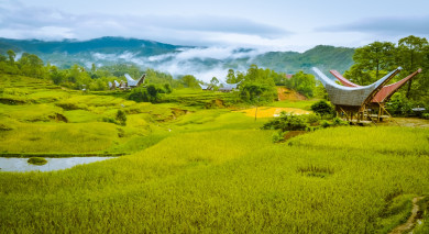 Empfohlene Individualreise, Rundreise: Höhepunkte von Sulawesi & Sumatra