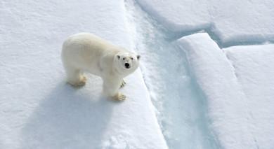 Empfohlene Individualreise, Rundreise: Spitzbergen – große Inseln, große Abenteuer