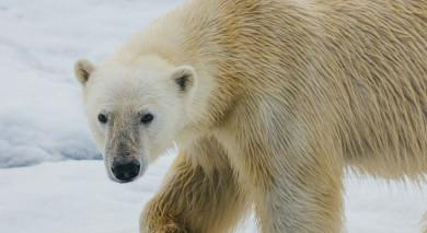 Empfohlene Individualreise, Rundreise: Russische Arktis – Franz Josef Land & Nowaja Semlja