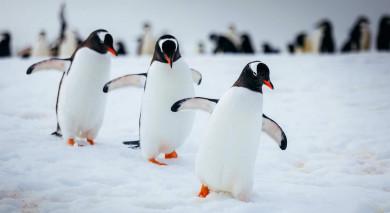 Empfohlene Individualreise, Rundreise: Antarktis – willkommen auf dem 7. Kontinent mit Kap Hoorn und Diego-Ramirez-Inseln