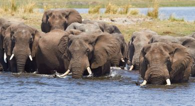 Example private tour: Victoria Falls & Botswana Highlights