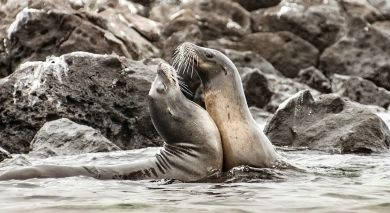Example private tour: Peru & Galapagos: Natural Marvels