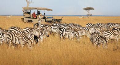 Empfohlene Individualreise, Rundreise: Von Kenia bis zur Gewürzinsel: Safari & Sansibar