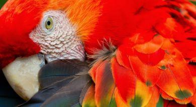 Empfohlene Individualreise, Rundreise: Peru Erlebnisreise: Die Anden und der Amazonas