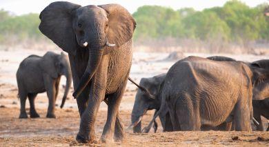 Empfohlene Individualreise, Rundreise: Masai Mara, Meru & Diani Beach – Safari & Strand in Kenia
