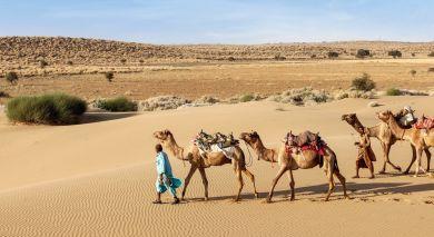 Empfohlene Individualreise, Rundreise: Rajasthan-Reise: Paläste und Tiger