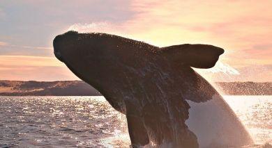 Example private tour: Argentina: Waterfalls, Marine Mammals and Gauchos