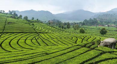 Empfohlene Individualreise, Rundreise: Sri Lankas schönste Seiten