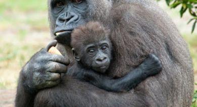 Empfohlene Individualreise, Rundreise: Kenia und Ruanda: Safari und Gorilla-Trekking