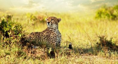 Example private tour: Tanzania – Southern Wilderness and Beach