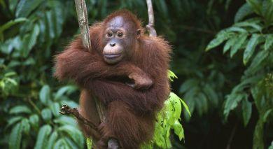 Empfohlene Individualreise, Rundreise: Abenteuer und Natur: Java und Bali