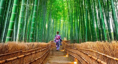 Example private tour: Highlights of Japan