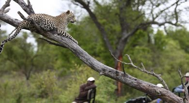 Empfohlene Individualreise, Rundreise: Kapstadt, Rovos Rails und Safari