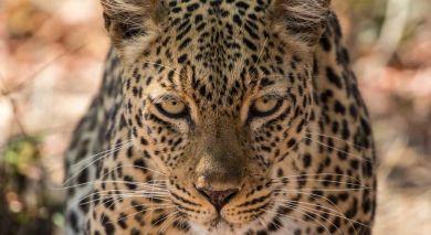 Empfohlene Individualreise, Rundreise: Sambia und Südafrika: Panoramaroute, Safari und Viktoriafälle