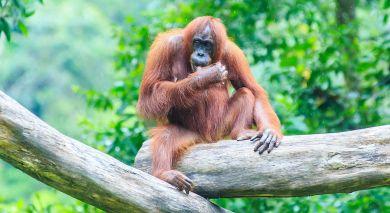 Empfohlene Individualreise, Rundreise: Wildnis und Strände Malaysias