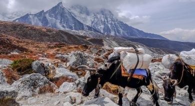 Empfohlene Individualreise, Rundreise: Große Nepal- und Tibetreise