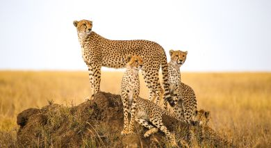 Empfohlene Individualreise, Rundreise: Tansania: Safari & authentische Einblicke