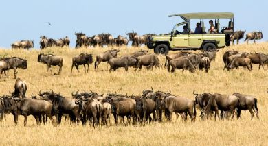 Example private tour: Wild Treasures of Tanzania