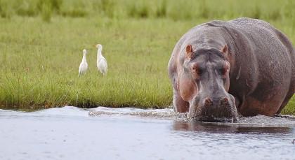 Chobe National Park in Botswana