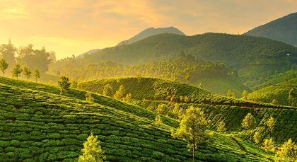 Reiseziel Munnar in Südindien